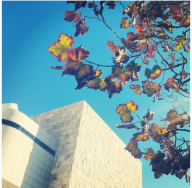 Leaves and architecture at The Getty in L.A. There's something really relaxing about that place. I absolutely love it there.